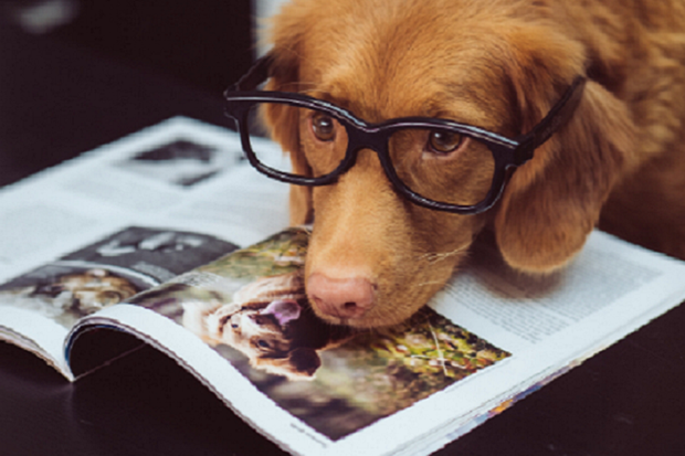 Dog reading a magazine with glasses on